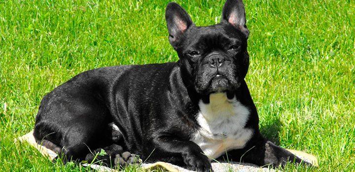 Fotos de perros rottweiler cachorros 50
