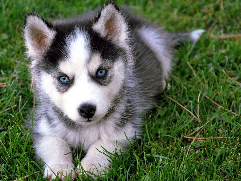 Imagenes de perros para colorear | Imagenes De Perros