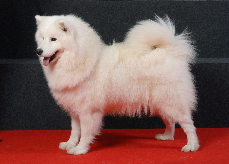 Fotos de perros rottweiler cachorros 39